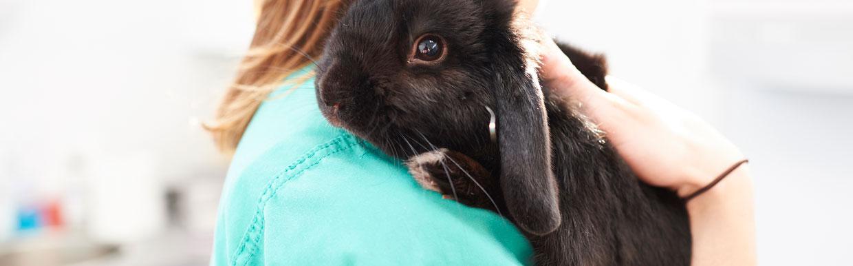 Sterilisatie en castratie konijn
